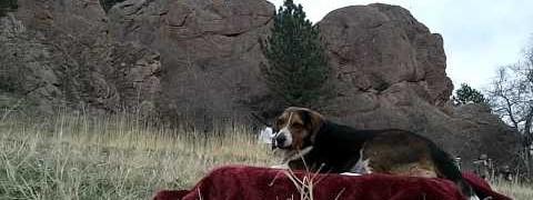 Beagle & Boffers